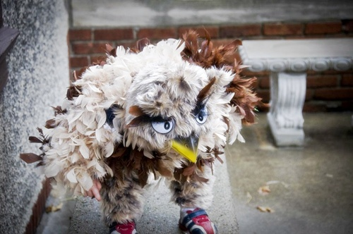 Disfraz de águila o búho.